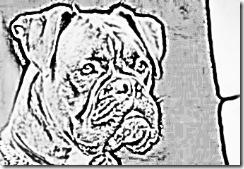 512px-Boxer_bringe_crop_340x234